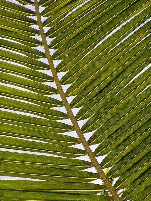 Kies ook voor de beste mini palmboom tegen een aantrekkelijke prijs
